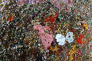 Nudibranch, Hawaii