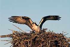 Birds of Prey (Inopinaves part 2)