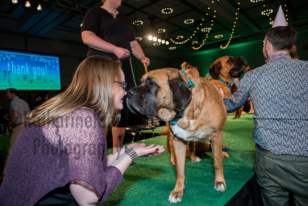 2017 Wet Nose Soiree, Dove Lewis Emergency Animal Hospital fundraiser at Oregon Convention Center on Friday, April 21 2017.