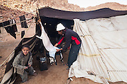 A Bedouin man skins a goat to make mansaf, a local delicacy of goat roasted in yogurt, at a Bedouin encampment in Wadi Rum, Jordan.