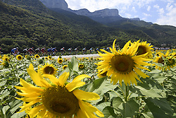 July 20, 2018 - Valence, France - The pack of riders pass a field of sunflowers during stage 13 of the 105th edition of the 2018 Tour de France cycling race, a stage of 169.5 kms between Bourg d'Oisans and Valence. (Credit Image: © Panoramic via ZUMA Press)