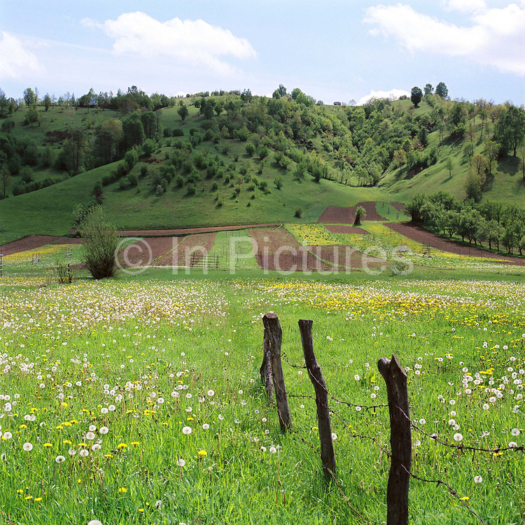 A typical strip farming landscape in Botiza, Maramures, Romania. In the Romanian Carpathians, the agricultural landscape consists of a diverse mixture of small fields, meadows and orchards situated around villages, interspersed with forest and woodlands.