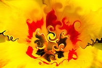 Surreal flower interior. On bright yellow background spirals in yellow and black colors. Around a crown in red color with many shades