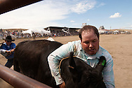 Wilsall Ranch Rodeo, Montana, Wild Cow Milking, Cleve Swandal, Kurt Mraz, Lazy SR Ranch Team, MODEL RELEASED