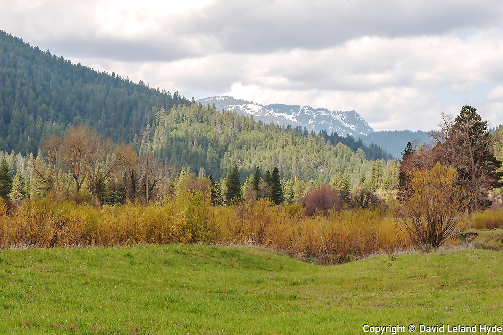 Mt. Hough From Genesee Valley, Meadow, Willows, Cottonwoods, Ponderosa Pine, Douglas Fir, Sierra Nevada Mountains, Spring