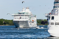 Seagulls flying over cruise ships in sea, Stockholm, Sweden