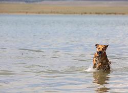 dog enjoying time in a lake