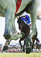 Jockey Craig Williams is seen riding Nozomi in race 8 the TAB Cranbourne Cup during Cranbourne Cup Day at  on October 15, 2017 in Cranbourne, Australia