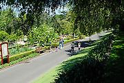 Shaded avenue above sealed road. Royal Botanic Gardens, Sydney, Australia