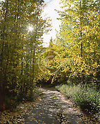 Alaska. Matanuska Valley. Old road and fallen leaves along the Glenn highway.