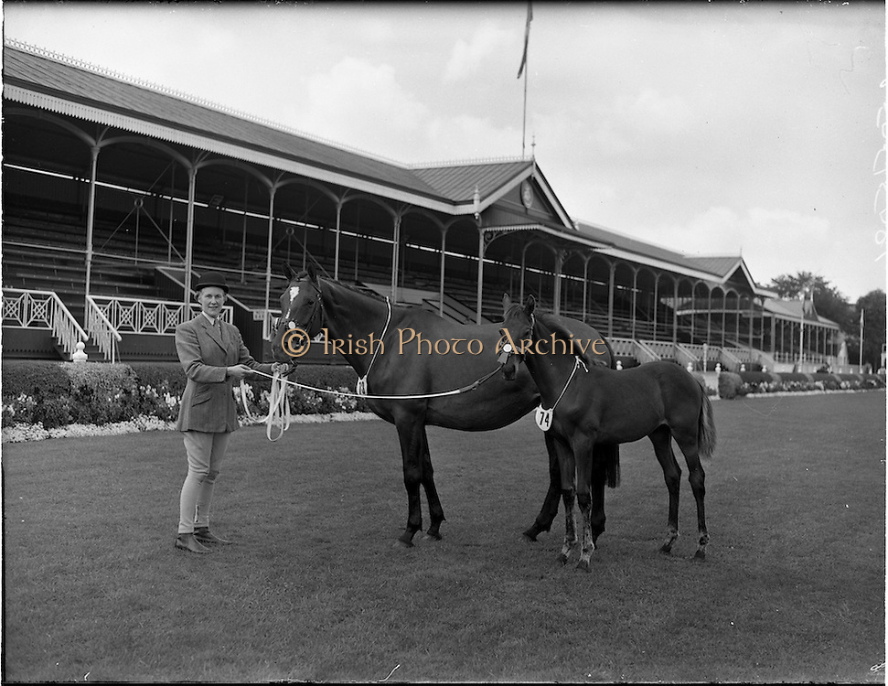 "02/08/1960<br /> 08/02/1960<br /> 02 August 1960<br /> R.D.S Horse Show Dublin (Tuesday). Mrs G.W. Wilson, Pidgeonstown, Co. Antrim, with mare ""Jungle Mill"" and colt foal, 1st prize winner in Thoroughbred mares at the Dublin Horse Show."
