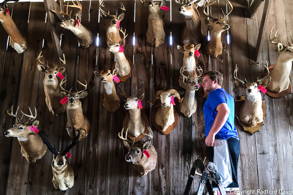 Taxidermy for sale. Heads of deer for sale mounted on a wall.