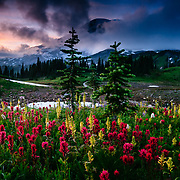 Mount Rainier Towering over Foggy Meadow of Wildflowers.