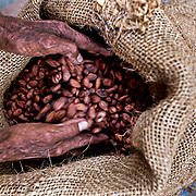 At the San Francisco of Asis Agro-ecology Centre (CASFA), Manuel García sells a sack of cocoa beans, weighing some 50 kilos, which is destined to be exported to Europe. Mazatán, Mexico.