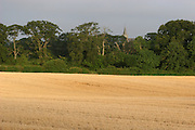 cereal, crop, harvest, farming, louth, ireland, irish, agriculture, arable, harvest,darver, church, trees, wheat,