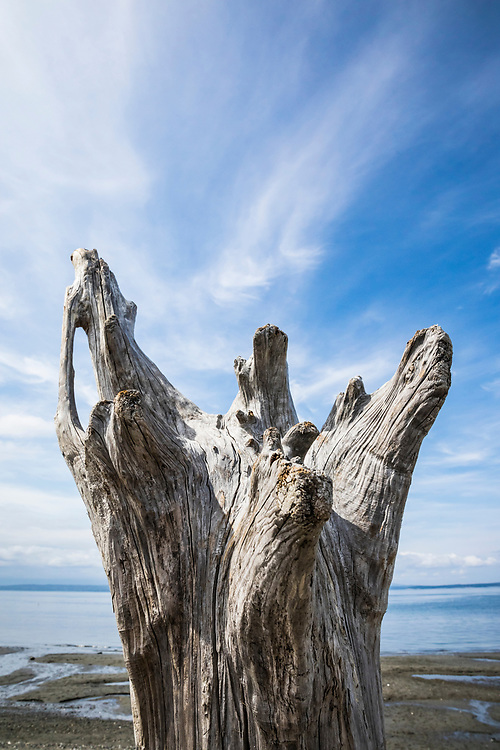 Driftwood and sky at Mutiny Bay, Whidbey Island, Washington, USA.