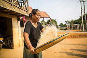 16 MARCH 2013 - ALONG HIGHWAY 13, LAOS:  A woman winnows rice in front of her home in the village of Phou Dam on Highway 13. The paving of Highway 13 from Vientiane to near the Chinese border has changed the way of life in rural Laos. Villagers near Luang Prabang used to have to take unreliable boats that took three hours round trip to get from the homes to the tourist center of Luang Prabang, now they take a 40 minute round trip bus ride. North of Luang Prabang, paving the highway has been an opportunity for China to use Laos as a transshipping point. Chinese merchandise now goes through Laos to Thailand where it's put on Thai trains and taken to the deep water port east of Bangkok. The Chinese have also expanded their economic empire into Laos. Chinese hotels and businesses are common in northern Laos and in some cities, like Oudomxay, are now up to 40% percent. As the roads are paved, more people move away from their traditional homes in the mountains of Laos and crowd the side of the road living off tourists' and truck drivers.   PHOTO BY JACK KURTZ