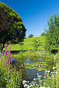 Wildlife pond, wildflowers, pond plants, Purple Loosestrife,Yarrow, apple tree and hornbeam tree in country garden, The Cotswolds, UK