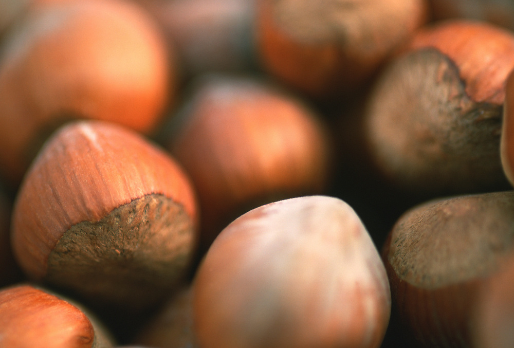Close up selective focus photograph of hazelnuts in their shells