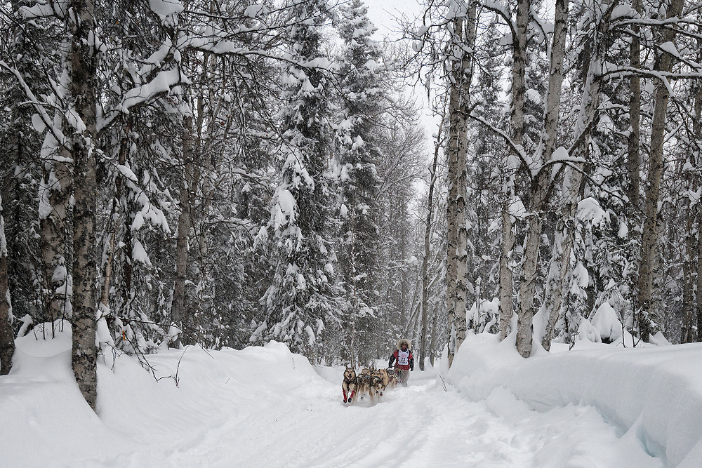 Aliy Zirkle and her team run along a trail through the woods during the 2020 Iditarod.