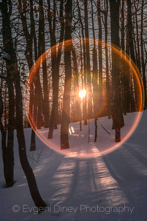 Lens flare effect through trees