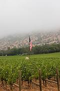 Vertical of American flag in Napa Valley vineyard