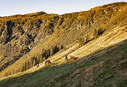 THEMENBILD - auf einer Almwiese grasen Pferde, aufgenommen am 15. September 2019, Saalbach Hinterglemm, Österreich // horses graze on a mountain pasture on 2019/09/15, Saalbach Hinterglemm, Austria. EXPA Pictures © 2019, PhotoCredit: EXPA/ Stefanie Oberhauser