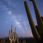 Stars and the Milky Way above a hillside of Saguaro cactus east of Peridot, Arizona.