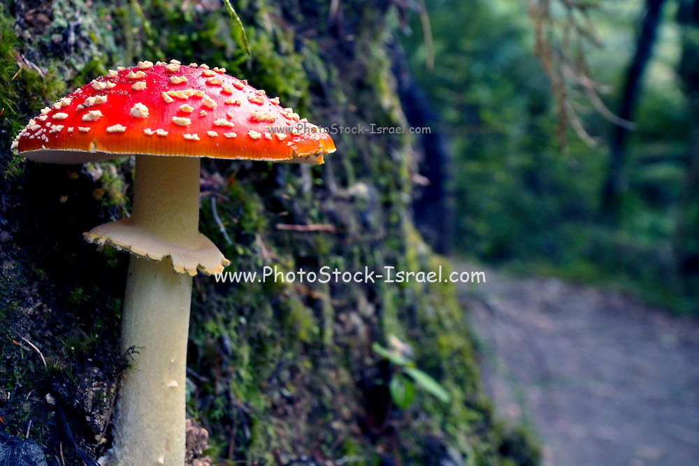 toadstools, Photographed in Fiordland, South Island, New Zealand