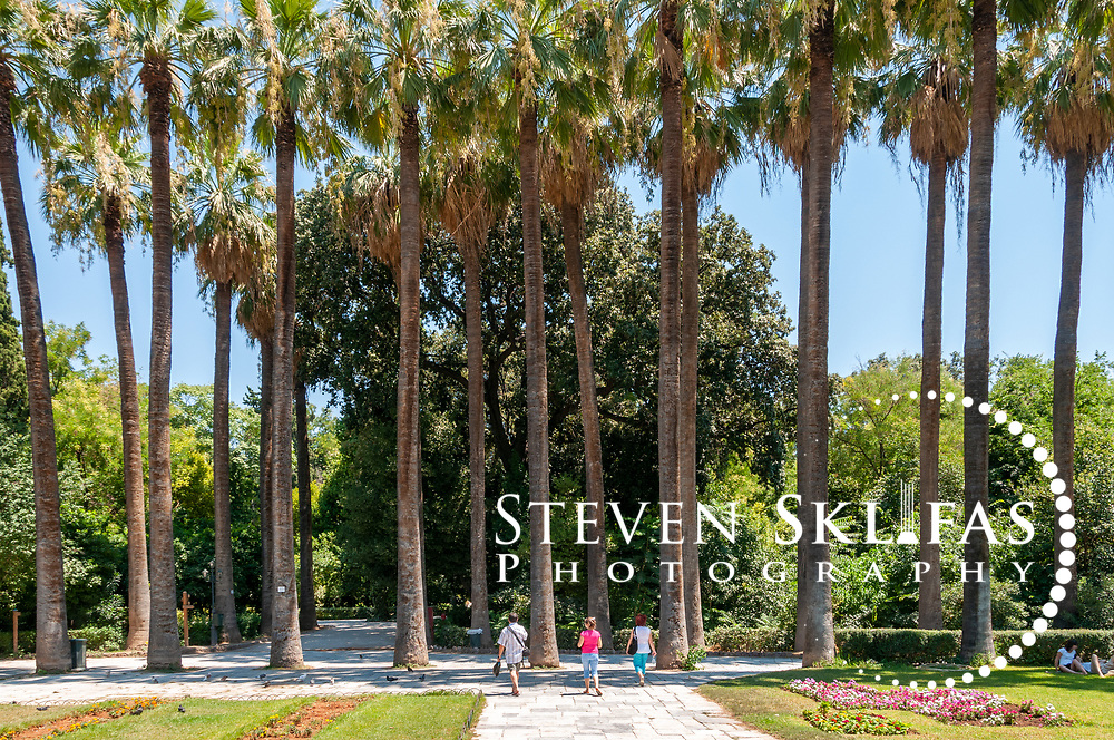 Athens. Greece. View of a majestic row of fine Palm trees at the National Gardens, a vast green refuge and oasis in the centre of Athens.