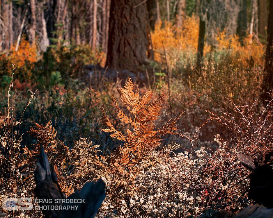 Yosemite photo trip November 2020. Porcupine Flats