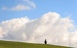 THEMENBILD - ein Pferd grast auf einer Bergwiese, aufgenommen am 30. September 2015, Pass Thurn, Mittersill, Österreich // A horse grazes on a mountain meadow near the Pass Thurn, Mittersill, Austria on 2015/09/30. EXPA Pictures © 2015, PhotoCredit: EXPA/ JFK
