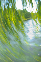 Tree river spree motion close up movement summer