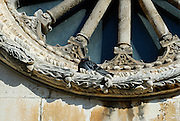 Detail of carved stone rose window, with pigeon. Dubrovnik old town, Croatia