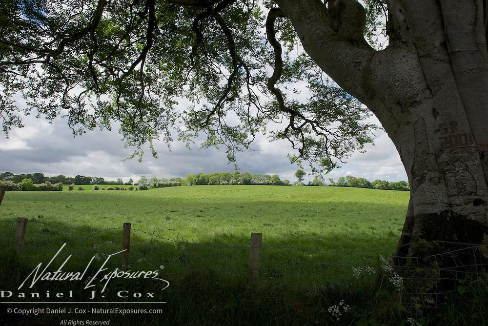 Irish countryside on our way to Dublin, Ireland.