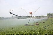 Large field irrigator machine spraying a crop of potatoes, Hollesley, Suffolk, England
