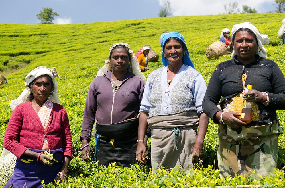 Tea pluckers on the Pedro Estate, Southern Highlands, Sri Lanka
