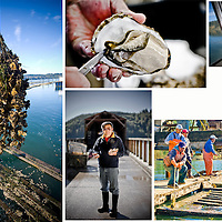 The Oregon Oyster Farm in Newport, OR, started by Marine Biologist Xin Lui, serves as one of the foremost oyster research centers in the west coast.