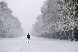 © Licensed to London News Pictures 01/02/2109, Cirencester, UK. Walkers enjoy the snowy wetaher in Cirecenster park, wlaking down the tree lined avenue.. Photo Credit : Stephen Shepherd/LNP