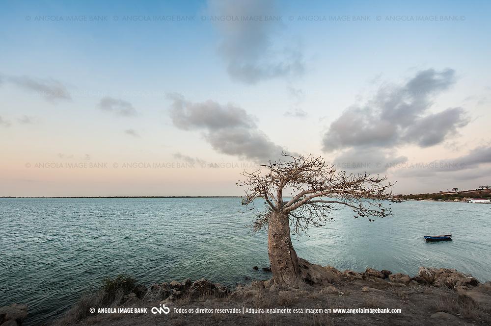 Embondeiro solitário próximo do Museu da Escravatura, baía do Mussulo. Angola