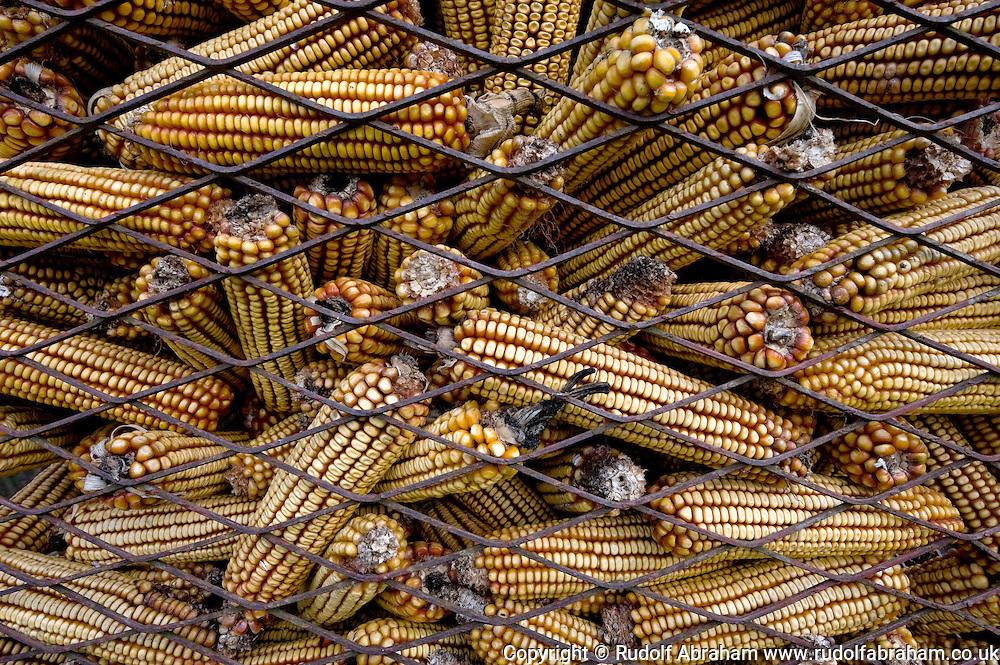 Dried corn cobs (stored to be used to feed livestock) in the village of Cigoc, Lonjsko polje nature park, Croatia