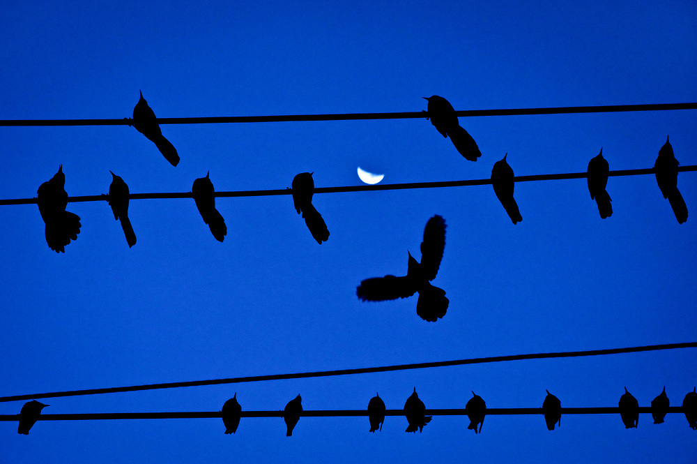 Birds on a wire and moonrise on Gessner Road, Memorial City Mall, Houston, Texas