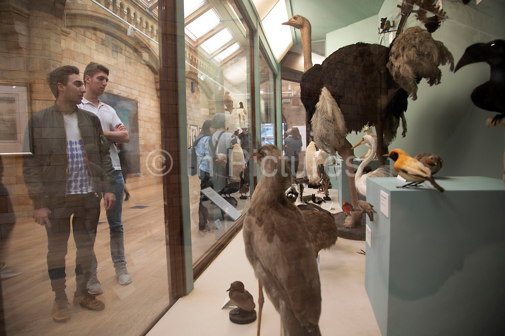 Visitors in the birds exhibition room at the Natural History Museum in London, England, United Kingdom. The museum exhibits a vast range of specimens from various segments of natural history. The museum is home to life and earth science specimens comprising some 80 million items within five main collections: botany, entomology, mineralogy, paleontology and zoology. The museum is a centre of research specialising in taxonomy, identification and conservation.