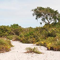 """""""Aberta de Clúsia (Paisagem) fotografado em Guarapari, Espírito Santo -  Sudeste do Brasil. Bioma Mata Atlântica. Registro feito em 2007.<br /> <br /> ENGLISH: Open of Clusia photographed in Guarapari, Espírito Santo - Southeast of Brazil. Atlantic Forest Biome. Picture made in 2007."""""""