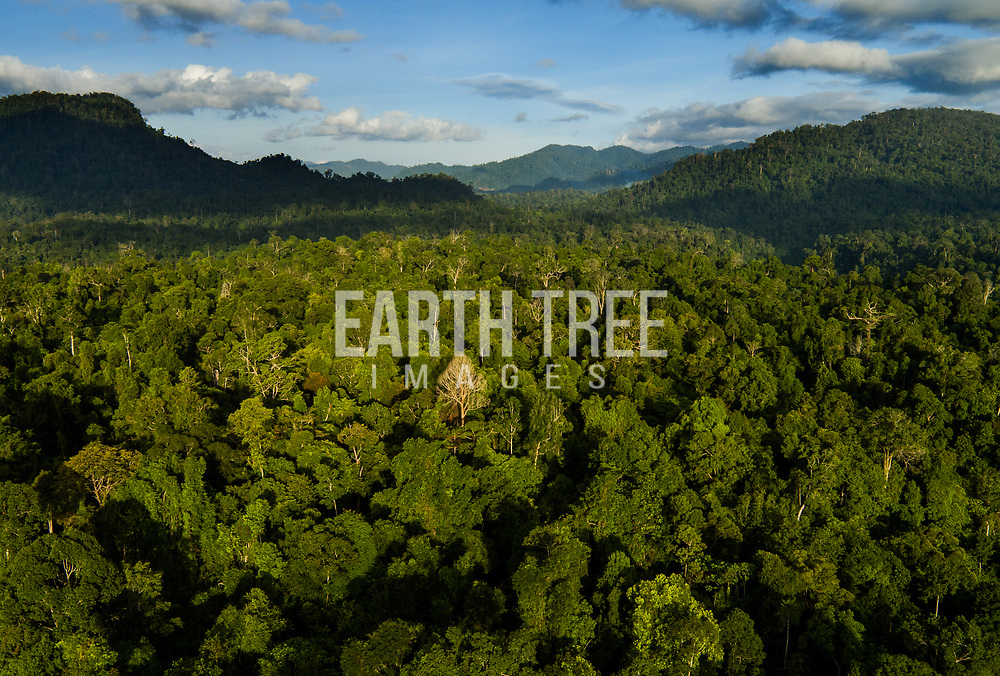 Forest cover, in the Soraya District, Leuser Ecosystem, Sumatra, Indonesia, Lat : 2,55.3582N Long: 97,56.0207E 15th August 2016. Photo: Paul Hilton for RAN Forest cover, Leuser Ecosystem, Sumatra, Indonesia. The Leuser Ecosystem is home to the largest extent of intact forest landscapes remaining in Sumatra and it is among the most biologically abundant landscapes ever described. Photo: Paul Hilton for Earth Tree Images
