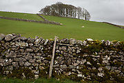 Dry stone wall in a farm land landscape, on 13th April 2017, in Horton in Ribblesdale, Yorkshire, England.