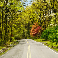 New Holland, PA / USA - May 4, 2020: A country road in the springtime in rural Lancaster Count, Pennsylvania.