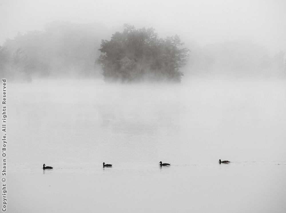Four Ducks, Cheshire, Ma