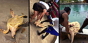 Turtle - Wildlife conservation at Goldeneye - Jamaica