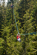 Alaska. Ketchikan. Rainforest canopy Adventures, a guided nature experience, takes you into the Tongass National Forest and assists in a unique view through the use of zip lines, platforms, and bridges across the canopy of rainforest below.